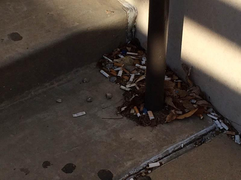 Cigarette Butt litter collected around Anschutz Library